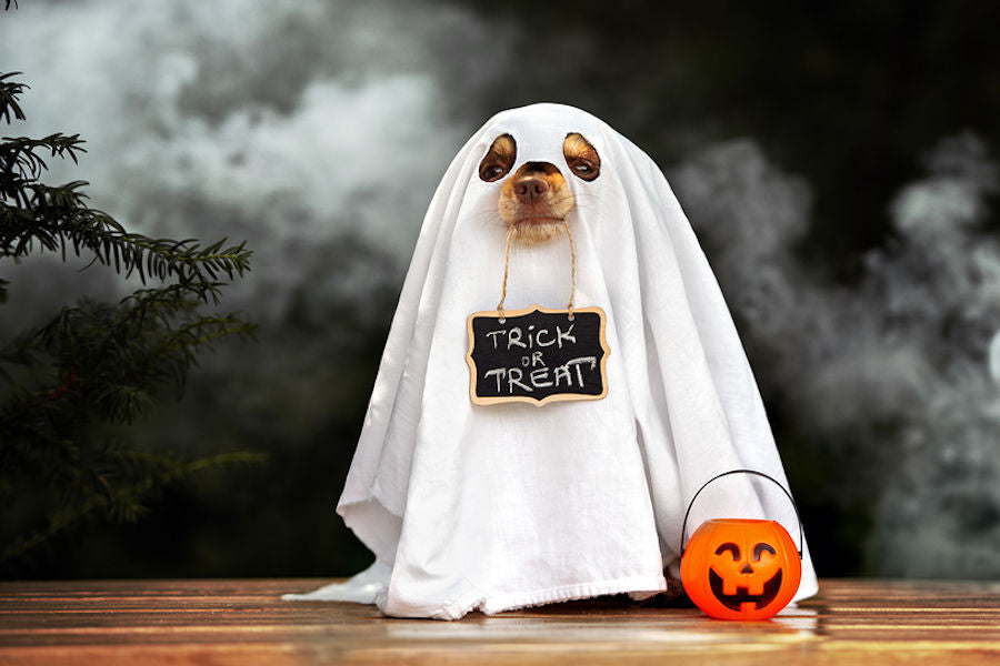 Dressing Up – Pet Costumes for Halloween