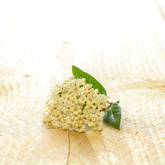 beautiful white flower laid on a wooden board