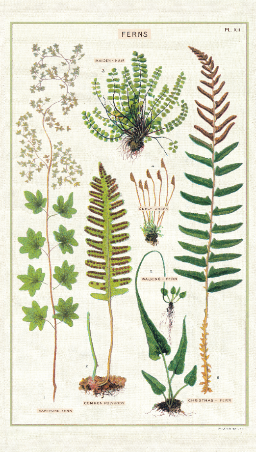 Cavallini Tea Towel - Ferns
