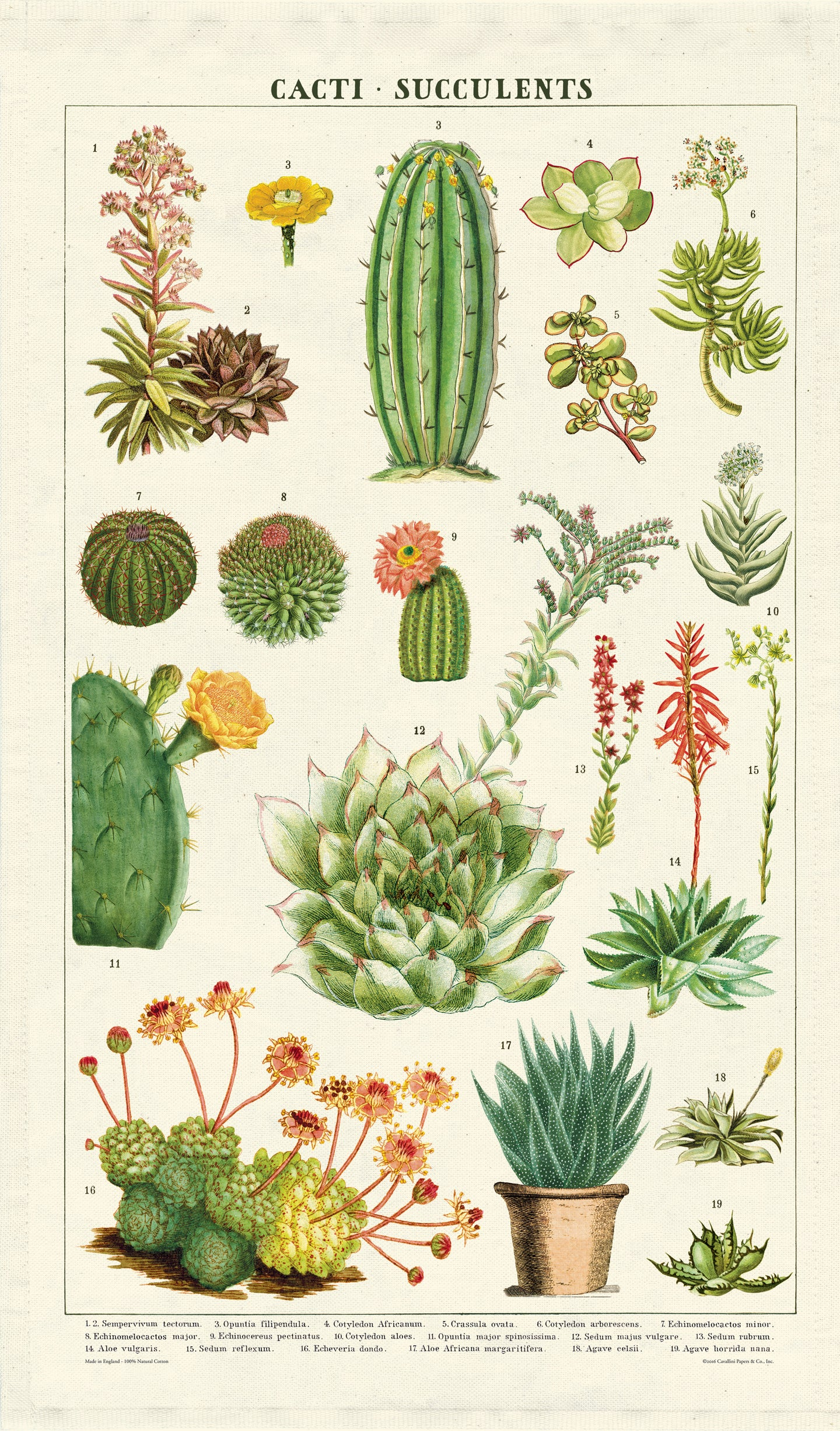 Cavallini Tea Towel - Succulents