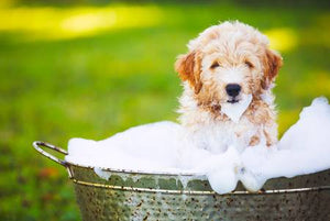 Washing Your Dog from Ear to Paw: Eight Supplies to Make It Easy