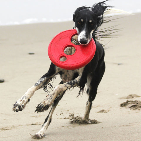 Rogz - RFO - Flying/Floating Frisbee- 23cm - Woofworths Premium Online Pet Supplies