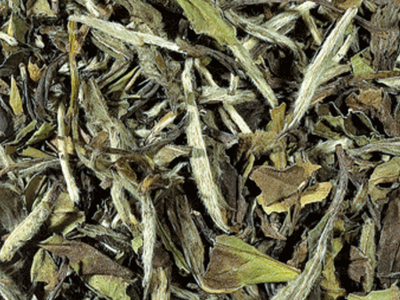White Tea (Pai Mu Tan)