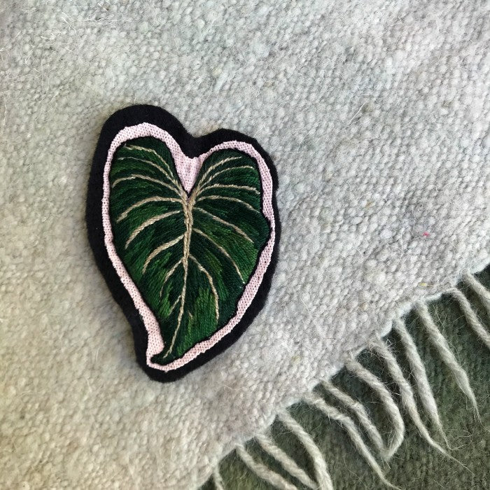Philodendron Patch