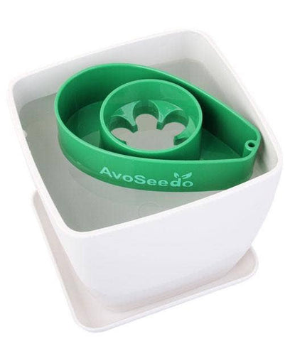 Green and White Plant Pot AvoSeedo Set
