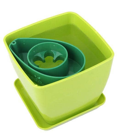 Green and Green Plant Pot AvoSeedo Set