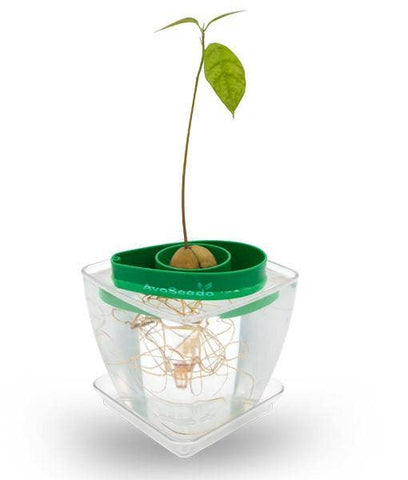 Green and Transparent Plant Pot AvoSeedo Set