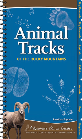 Animal Tracks of the Rocky Mountain