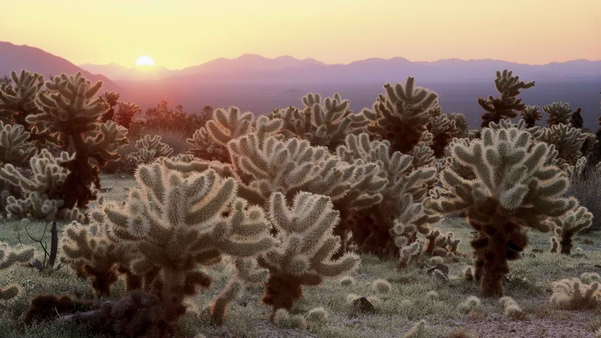 world-california-cactus-national-park-joshua-tree-national-park-1920x1080-hd-wallpaper