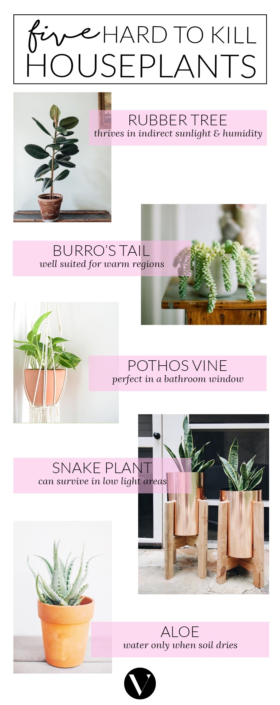 five hard to kill houseplants