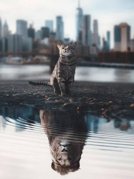 Cat with Lion Reflection - Diamond Painting Corner