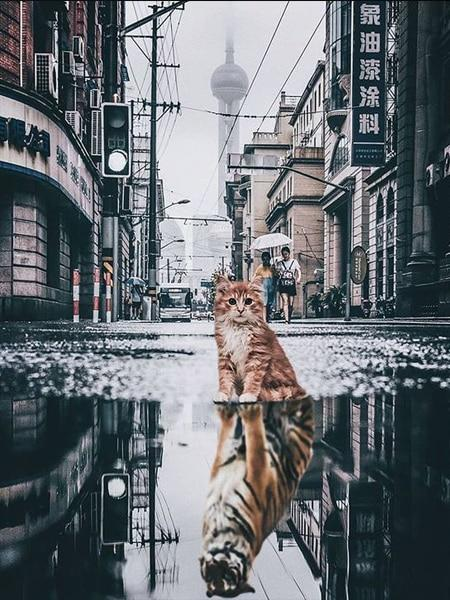 Cat with Tiger Reflection - Diamond Painting Corner