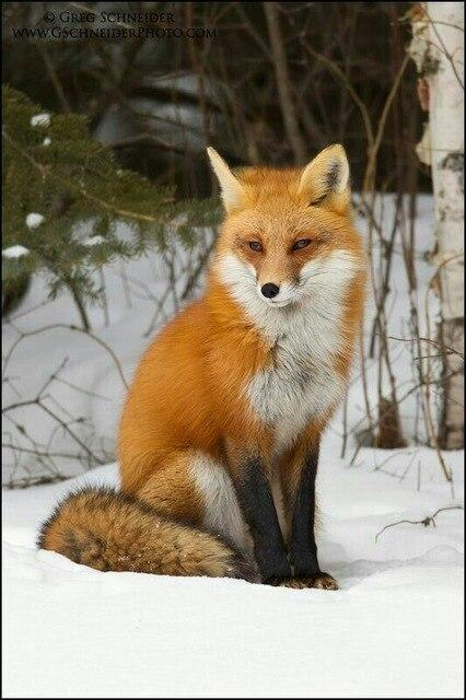 Fox Sitting in Snow Diamond Painting Kit - Diamond Painting Corner