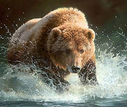Grizzly Bear Trying to Fish - Diamond Painting Corner