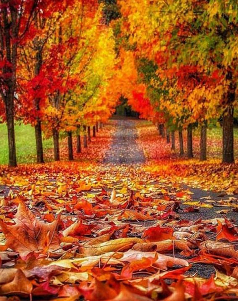 Path with Autumn Leaves - Diamond Painting Corner