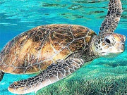 Swimming Turtle Diamond Painting Kit - Diamond Painting Corner