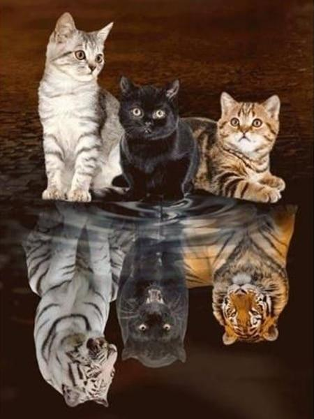 Three Cats and Their Reflections - Diamond Painting Corner