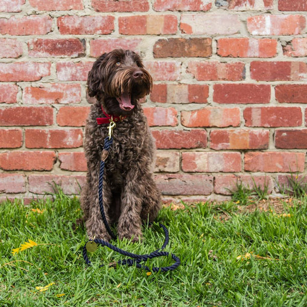 Royal Navy + Brass Rope Dog Leash - Sunday Paws
