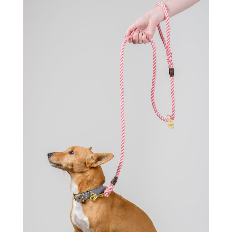 Rose Pink + Brass Rope Dog Leash - Sunday Paws