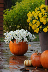 fall patio ideas