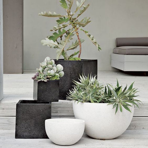 modern outdoor planting