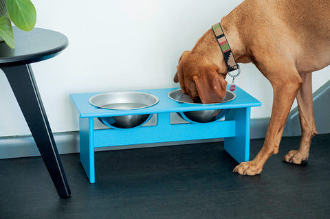 An image of a dog drinking out of the Double Dog Bowl in blue from Creative Living's collection of modern patio furniture.