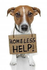 Pawabella help the homeless dog hamper