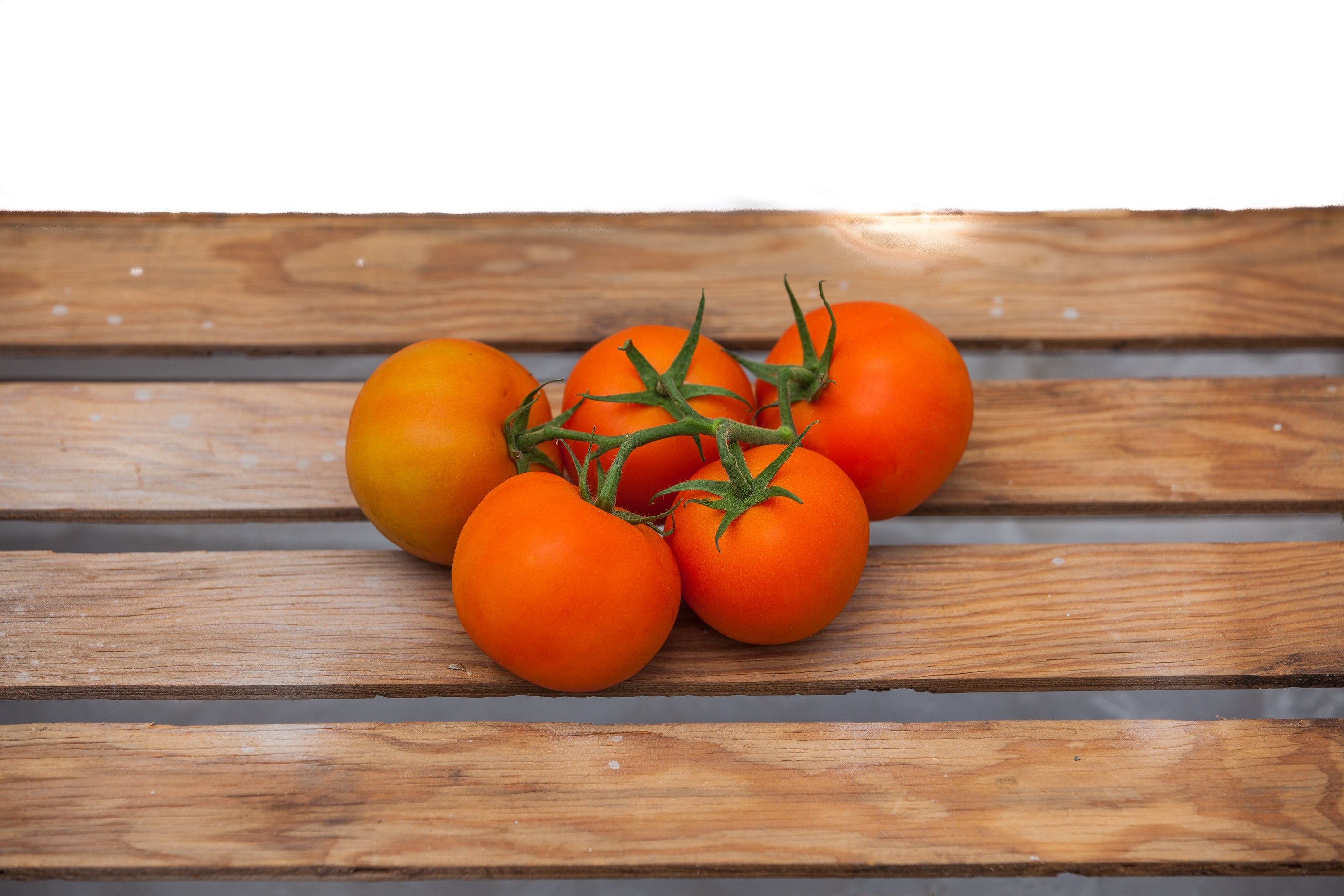 Cluster Tomato (Tomato on the Vine)