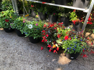 "12"" Assorted Planters"