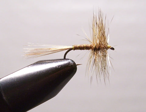 Quill Mayfly