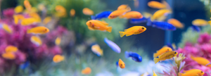 Fish Food Online Pet Shop