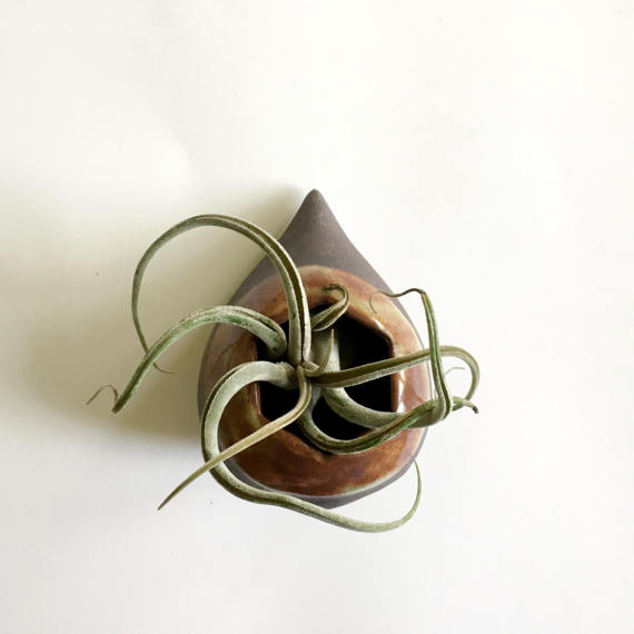 Handcrafted Ceramic Wall Vase / Air Plant Holder