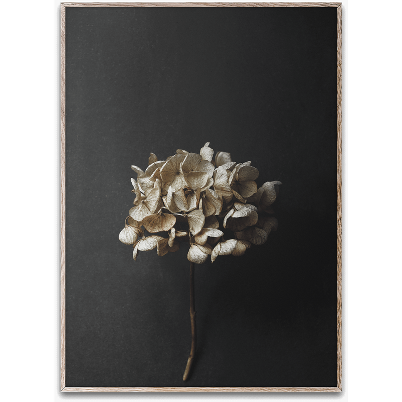 Still Life 04 (Hydrangea) By Pia Winther - Black and Gold Frame