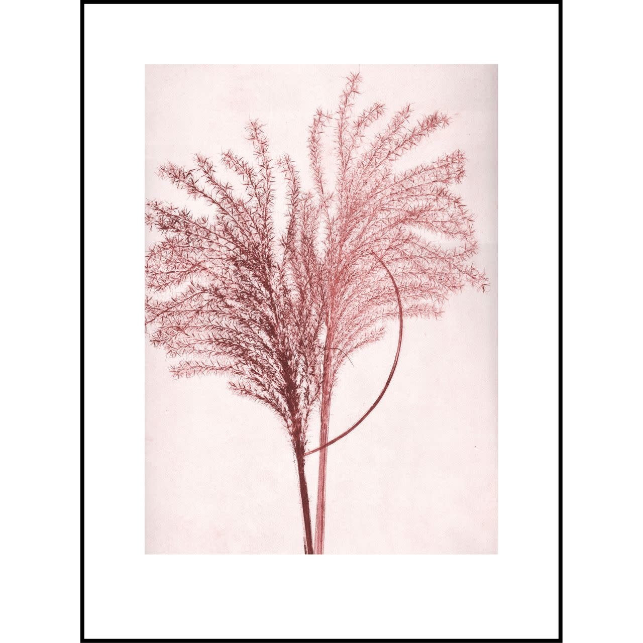 Light Pink Silvergrass Sunrise - Black Frame