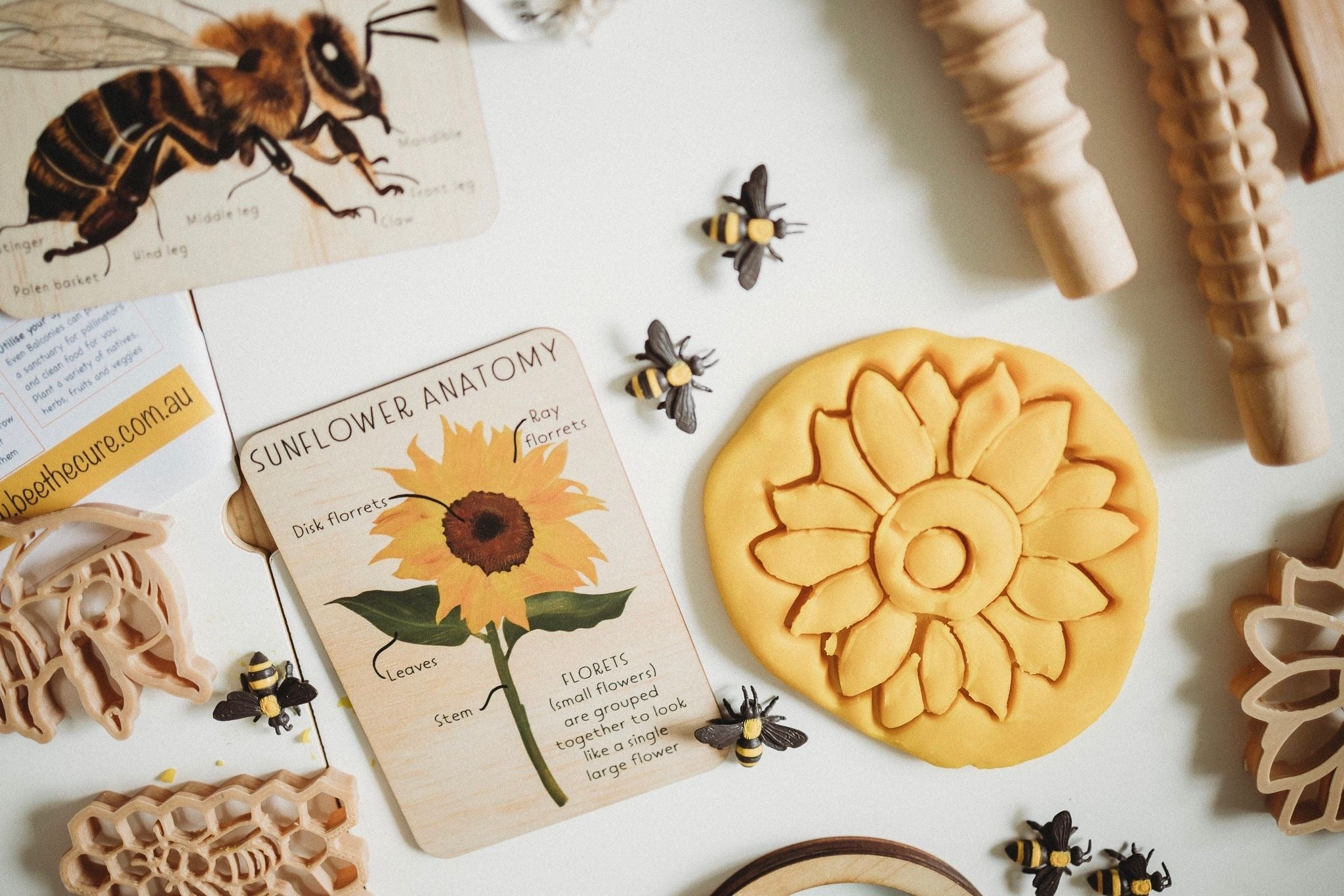 Wooden Sunflower Anatomy Tile + Matching Colouring In Card