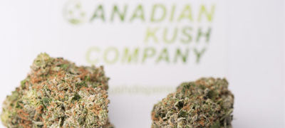 About us at The Canadian Kush Company