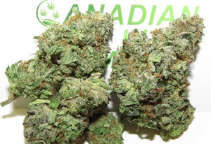 Canadian Kush Party Pack (Sampler)