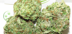 DeathBerg Kush at The Kush Dispensary