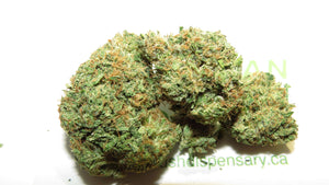 Lindsay OG Kush at The Kush Dispensary