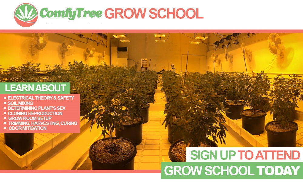 comfytree cannabis academy and grow school grow operation