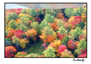 Note Card – Aerial in Autumn