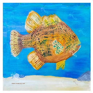 Pumpkin Seed Sunfish – Framed Art Print