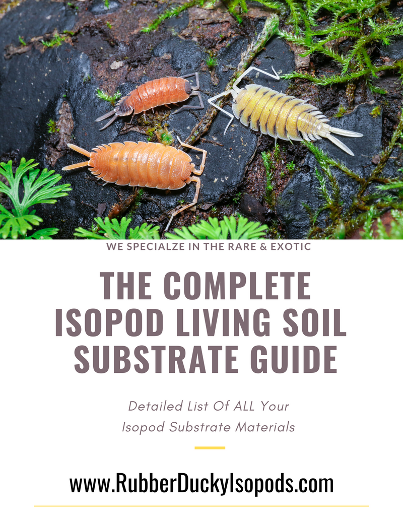 The Complete Isopod Substrate Guide