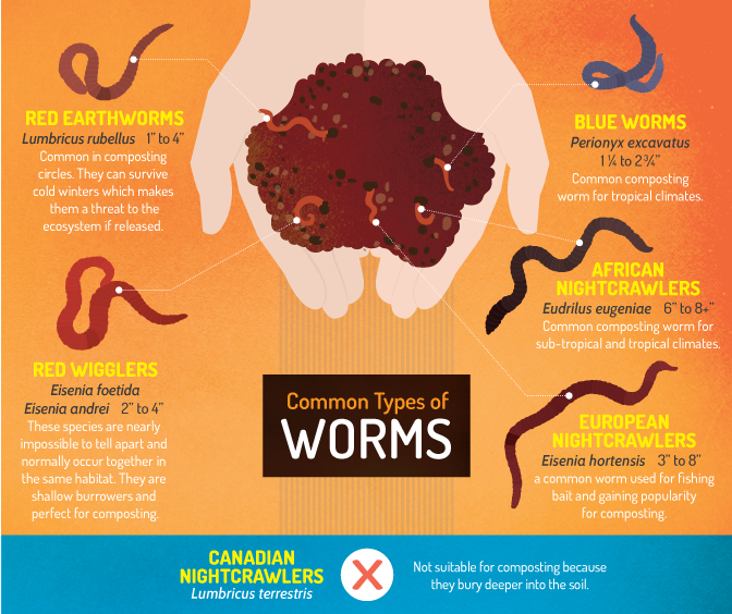Isopods & Composting Worms