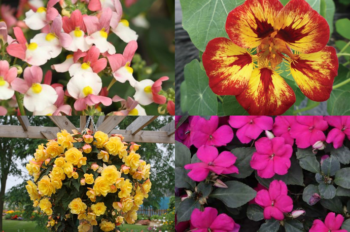 Exotic Summer Plants for Patio Pots