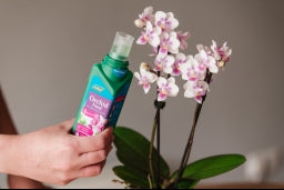 Liquid Orchid Feed
