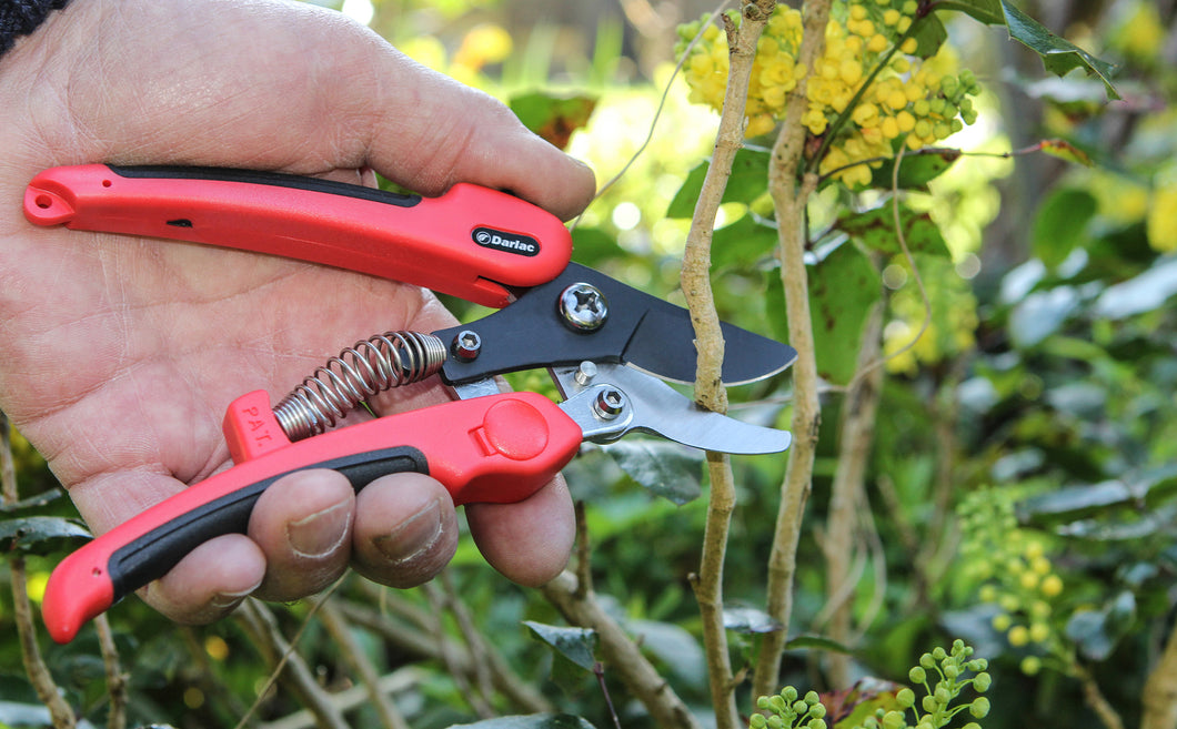 Compound Action Pruner