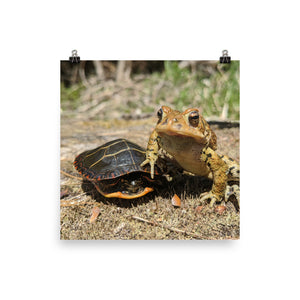 """Frog & Turtle"" Photo paper poster"