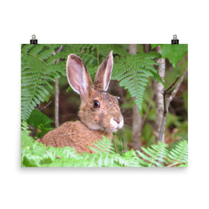 Photo paper poster (Maine Snowshoe Hare)