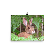Load image into Gallery viewer, Photo paper poster (Maine Snowshoe Hare)